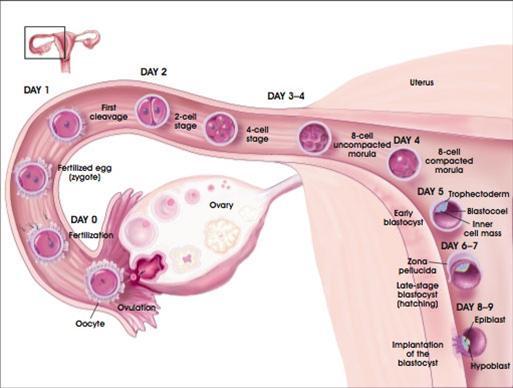 Nguy hiểm của bệnh viêm vòi trứng